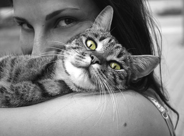Kočka – rovnoprávná společnice