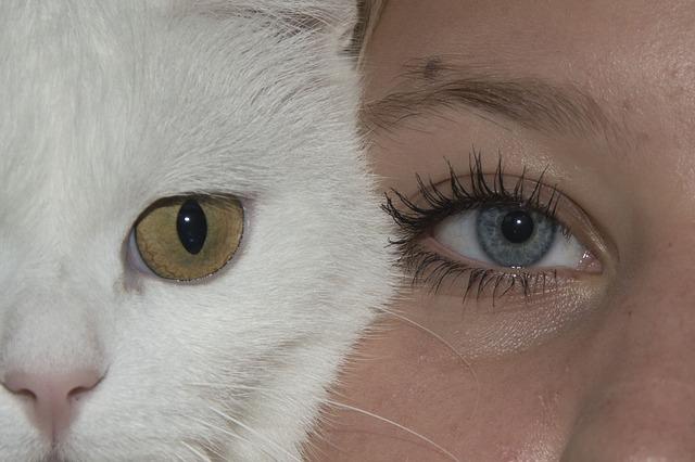 kočka a děvče