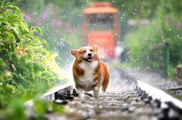 pes na kolejích
